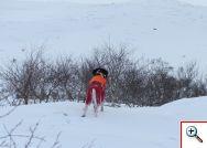 Pointnics Laiba vinterjakta
